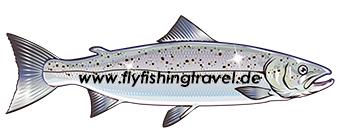 fliegenfischen weltweit